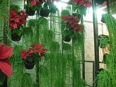 2-1  植生綠牆-花牆-立面綠化-垂直綠化-植生牆:綠牆 -- 新營休息站 990224-12.JPG