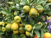 11-14  果樹 - 水果: