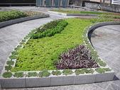 1-1  綠屋頂 -- 屋頂綠化:1 綠屋頂-信義行政中心 009.JPG