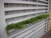2-1  植生綠牆-花牆-立面綠化-垂直綠化-植生牆:綠牆 -- 台北 龍鳳學院980919- 06.