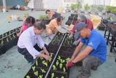 1-4  屋頂菜園 -- 竹南營盤社區之社區營造屋頂菜園:103-1022 屋頂菜園--營盤社區營造 (181).jpg