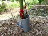 4-4  雪見 - 環境教育及工作假期:104-0430-2 泰安國小環境教育--種樹 (45).jpg