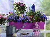 5-5  花:花 101-0728-06.jpg