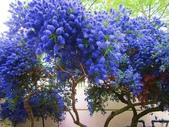 5-5  花:101-0727-2 夢幻璀璨的藍.jpg