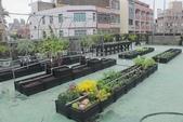 1-4  屋頂菜園 -- 竹南營盤社區之社區營造屋頂菜園:103-1022 屋頂菜園--營盤社區營造 (199).jpg