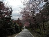 4-5  武陵的春天 --  武陵賞櫻:武陵 100-0212- 322.jpg