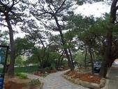 樹木棲地改善--麗池公園土壤透氣工法:104-1223 麗池--透氣工法 (30).jpg