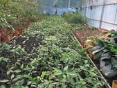 4-3  雪霸原生植物繁殖培育:104-1213 雪霸苗圃 (1).JPG