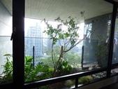 陽台上種大樹 -- 若山:105-1021 綠建築新工法審查--若山 (17).jpg