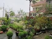 7  藍山園藝:102-0713 蘇力颱風 (2).jpg