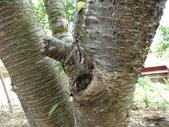 4-4  雪見 - 環境教育及工作假期:104-0430-2 泰安國小環境教育--種樹 (52).jpg