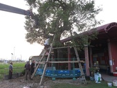大樹工程-老樹移植-台中水湳列管老樹移植:105-1005 台中水湳列管老樹移植-- (85).jpg
