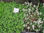 1-11  綠屋頂 -- 盆缽式綠屋頂、屋頂菜園:盆缽式綠屋頂  101-0620 (5).jpg