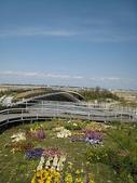 1-1  綠屋頂 -- 屋頂綠化:屋頂綠化-綠屋頂 IMG_4490.JPG