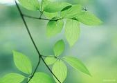 5-1  台灣的自然美景--網路圖片:秋景  15