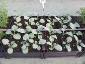 1-4  屋頂菜園 -- 竹南營盤社區之社區營造屋頂菜園:103-1030 屋頂菜園--營盤社區營造 (8).jpg