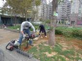 樹木棲地改善--麗池公園土壤透氣工法:104-1221 麗池--透氣工法 (5).jpg