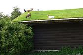 1-1  綠屋頂 -- 屋頂綠化:animals-on-green-roof.jpg