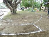 樹木基盤改善--台北列管老樹816號:105-1020 樹木基盤改善--台北列管老樹816號 (8).jpg