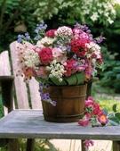 5-5  花:花 101-0728-36.jpg
