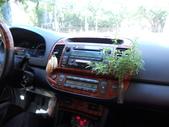 5-5  花:計程車上的綠意.JPG