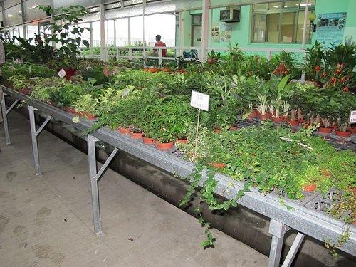 藍山園藝 -8-  花卉產地、農場參觀:102-0821-2 台中觀摩-中社花市  (4