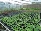 4-3  雪霸原生植物繁殖培育:104-1102 雪霸苗圃 (3).JPG