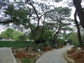 樹木棲地改善--麗池公園土壤透氣工法:104-1223 麗池--透氣工法 (10).jpg