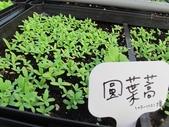 1-4  屋頂菜園 -- 竹南營盤社區之社區營造屋頂菜園:103-1030 屋頂菜園--營盤社區營造 (3).jpg