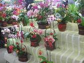 7  藍山園藝:藍山園藝  99春節 10.JPG