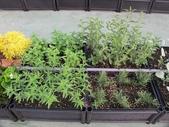 1-4  屋頂菜園 -- 竹南營盤社區之社區營造屋頂菜園:103-1030 屋頂菜園--營盤社區營造 (7).jpg