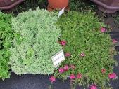 1-11  綠屋頂 -- 盆缽式綠屋頂、屋頂菜園:盆缽式綠屋頂  101-0620 (3).jpg