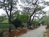 樹木棲地改善--麗池公園土壤透氣工法:104-1223 麗池--透氣工法 (11).jpg