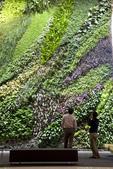綠牆--法國綠牆大師派翠克.布朗克(Patrick Blanc)綠牆作品:1201191866.jpg