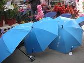7  藍山園藝:藍山園藝  請用雨傘 02.JPG