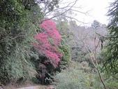 4-4  雪見--雪霸國家公園雪見遊憩區:101-0221 雪見--山櫻花 (56).jpg