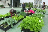 1-4  屋頂菜園 -- 竹南營盤社區之社區營造屋頂菜園:103-1127  營盤社區屋頂菜園--審查及收成 (29).jpg