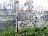 陽台上種大樹 -- 若山:105-1021 綠建築新工法審查--若山 (27).jpg