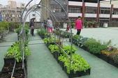 1-4  屋頂菜園 -- 竹南營盤社區之社區營造屋頂菜園:103-1127  營盤社區屋頂菜園--審查及收成 (45).jpg