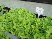 1-4  屋頂菜園 -- 竹南營盤社區之社區營造屋頂菜園:103-1030 屋頂菜園--營盤社區營造 (1).jpg