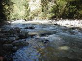 4-5  台灣櫻花鉤吻鮭  族群數量調查:DSCN9441  桃山西溪--櫻花鉤吻鮭數量調查