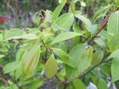 9-5  園藝技術 -- 施肥:104-0227-4  肥料試驗-八寸盆40克 (3).jpg