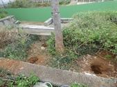 樹木棲地改善--麗池公園土壤透氣工法:104-1221 麗池--透氣工法 (10).jpg