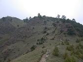 4-6  雪山--五月賞杜鵑:DSCN7659  滿山滿谷的杜鵑