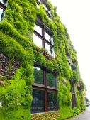 綠牆--法國綠牆大師派翠克.布朗克(Patrick Blanc)綠牆作品:Amphitheatre, Cartier Foundation.jpg