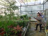 4-3  雪霸原生植物繁殖培育:104-1102 雪霸苗圃 (5).JPG