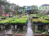 7  藍山園藝:961007 藍山園藝--科羅莎颱風DSCN9379