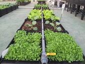 1-4  屋頂菜園 -- 竹南營盤社區之社區營造屋頂菜園:103-1030 屋頂菜園--營盤社區營造 (29).jpg