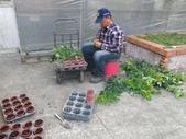 4-3  雪霸原生植物繁殖培育:104-0225  雪霸苗圃維護 (63).JPG