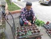 4-3  雪霸原生植物繁殖培育:104-0225  雪霸苗圃維護 (65).JPG